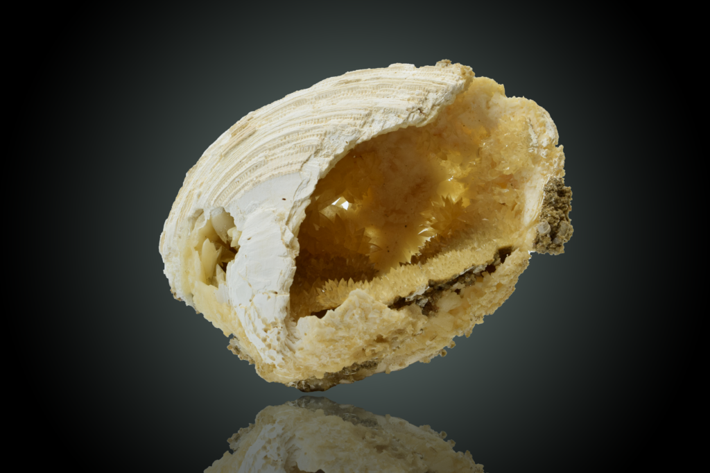 Calcite Crystals Lining Fossil Clam Shell, Virginia Beach